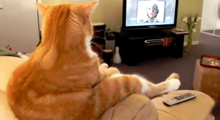 Il gatto è SEDUTO sul divano: nemmeno la padrona riesce a credere a ciò che vede