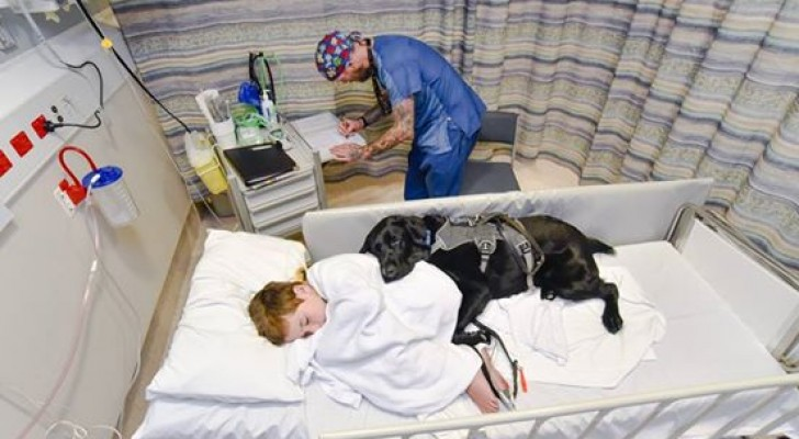 Geleidhond wijkt niet van de zijde van zijn baasje, ook niet bij ziekenhuisopname: Dat is pas liefde!