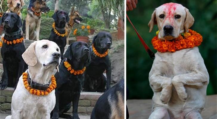 Een festival om honden te bedanken voor hun trouw: dat levert spectaculaire beelden op