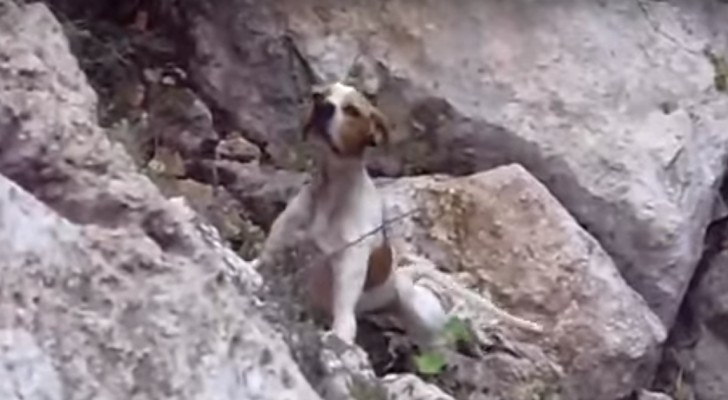 When a dog abandoned in a ravine sees its saviors: its reaction is very emotional!