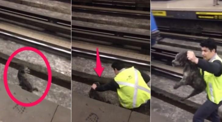 Tågföraren har stannat tåget: när ni upptäcker varför så kommer ni att förstå att han är en riktig hjälte...