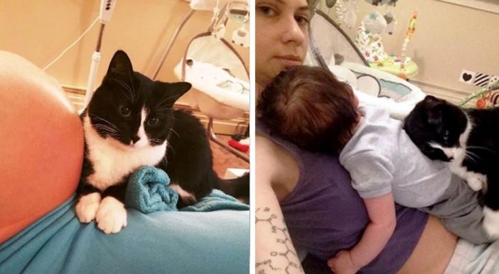 Questo gatto ha iniziato a proteggere il suo piccolo umano ancora prima che nascesse
