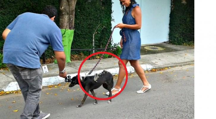 Questo cane si porta dietro la sua cucciolata, ma non è esattamente quella che ti aspetti