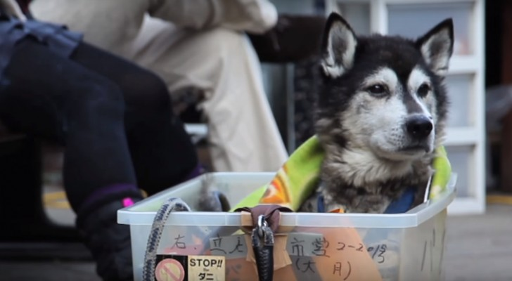 Veja como todos os cães idosos deveriam ser tratados: isso é amor puro!