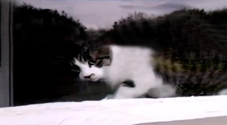 Il postino trova il gatto sulla finestra: ciò che avviene ogni giorno è esilarante