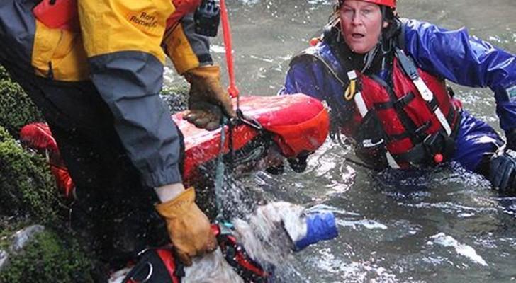 Mettono in pericolo la loro vita per salvare un cane: ecco cosa vuol dire essere eroi
