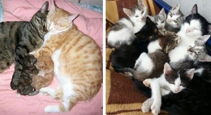 20 foto's van katten die maar al te goed weten wat het is om een gezin te hebben