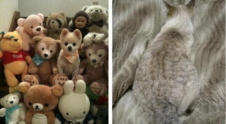 18 foto buffissime di animali che si improvvisano maestri della mimetizzazione