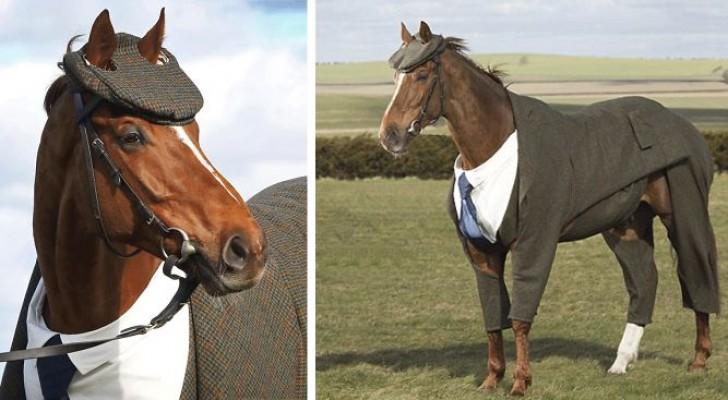 Ze Maken Een Compleet Pak Voor Een Voormalig Renpaard… Het Elegante Resultaat Mag Er Wezen!