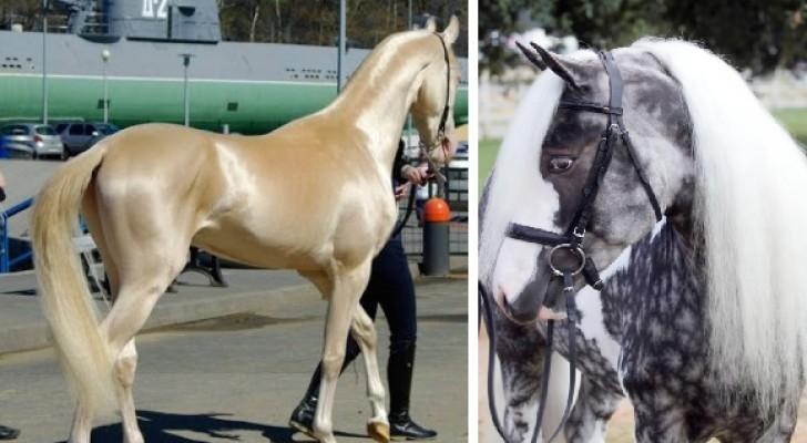 9 cavalli tra i più particolari del mondo: ve ne innamorerete all'istante