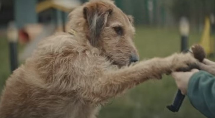 Un cane attende il suo amico a due zampe: la sua storia fa piangere e rilfettere