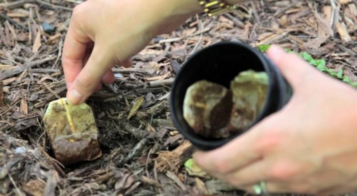 10 choses que vous pouvez faire avec les sachets de thé au lieu de les jeter à la poubelle