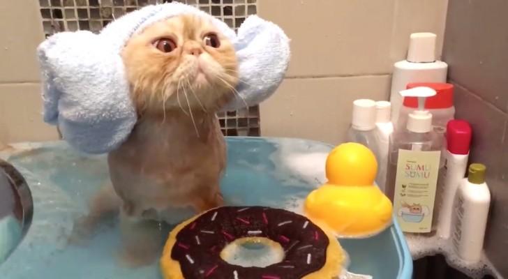 Se siete convinti che i gatti odino l'acqua, questo video vi farà cambiare idea
