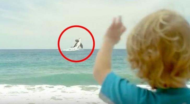 Een kind neemt afscheid van zijn orka: deze video is bedoeld om je ogen te openen
