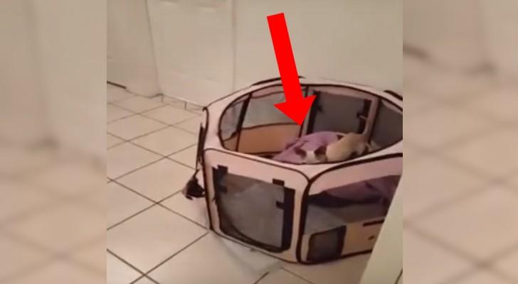 Não conseguiam entender como o cachorro fazia para sair do box: mistério resolvido!