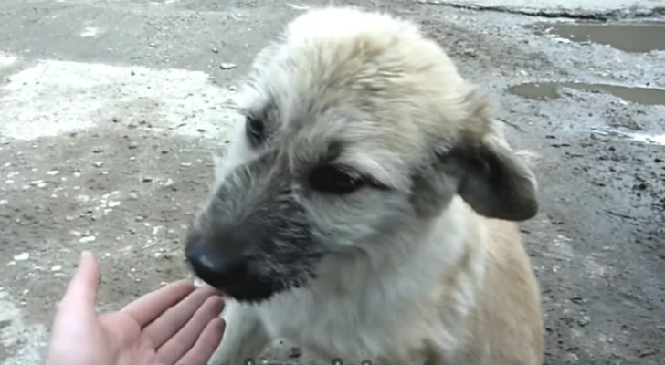 Een man vindt een in de steek gelaten hond: kijk wat de hond doet als de man hem nadert...