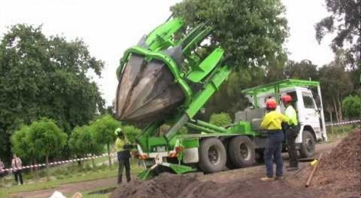 Déplacer des arbres ... Rien de plus facile!