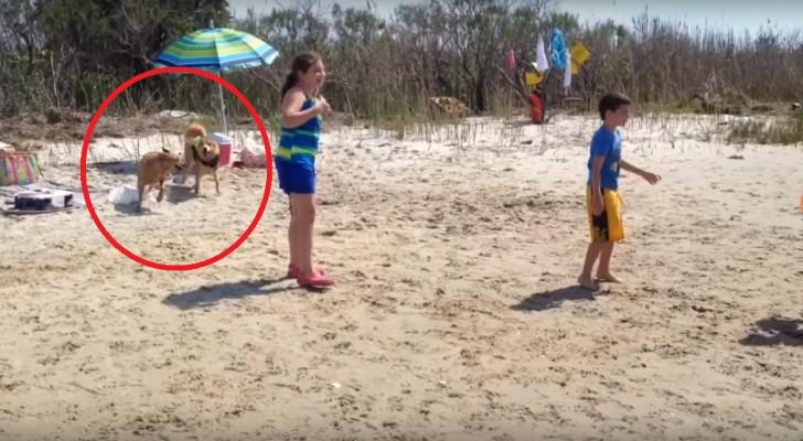 Verlies je kinderen maar ook zeker je hond niet uit het oog op het strand!