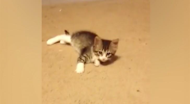 Il gatto sta giocando sul tappeto, ma poi arriva qualcuno... e cambia tutto!