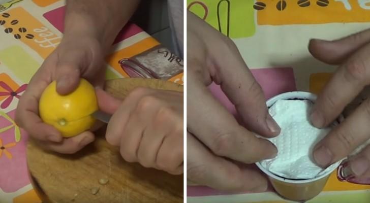 Apprenez à planter les pépins de citron pour donner naissance à un arbre tout à vous
