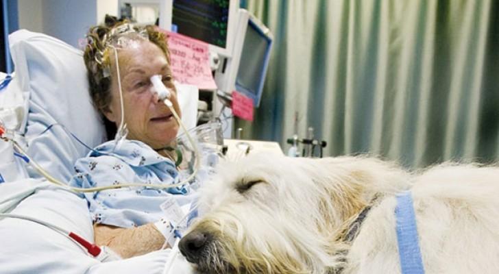 Questo ospedale permette ai cani di visitare i loro padroni malati: gli effetti sono sorprendenti