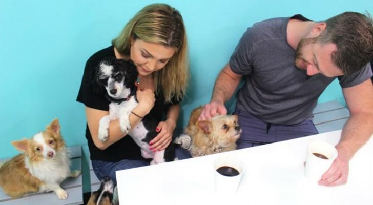 In questo bar i clienti bevono caffè circondati dai cani: il motivo è più nobile di quanto pensi