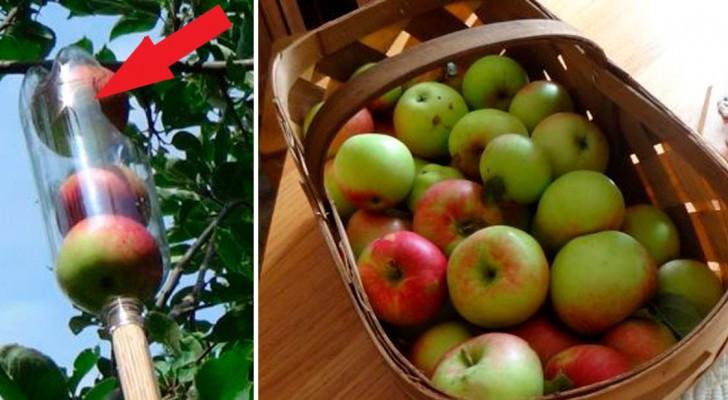 Ecco come raccogliere la frutta da un albero... Faticando il meno possibile!
