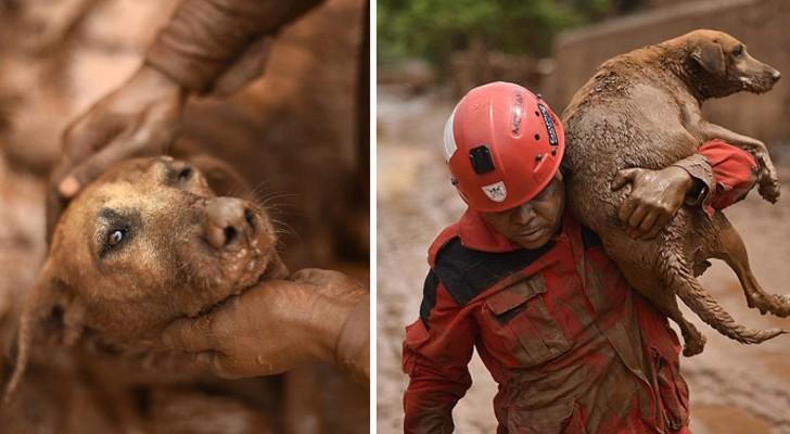 La ville a été détruite par la boue: le geste d'un pompier a ému le monde entier