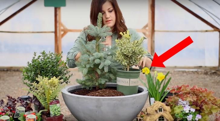 Ein Mädchen setzt verschiedene Pflanzen in einen Topf. Das Ergebnis ist einfach nur magisch