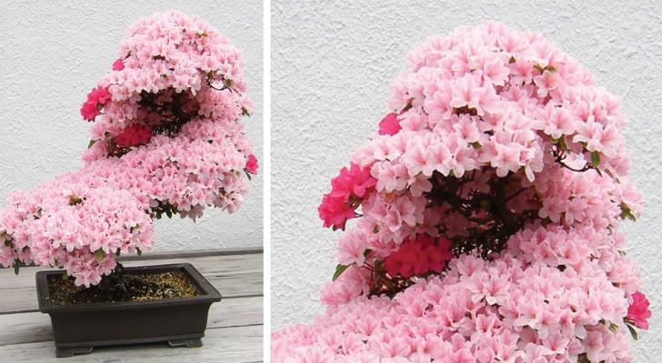 Voici quelques-uns des plus anciens et magnifiques bonsaïs. WOW!