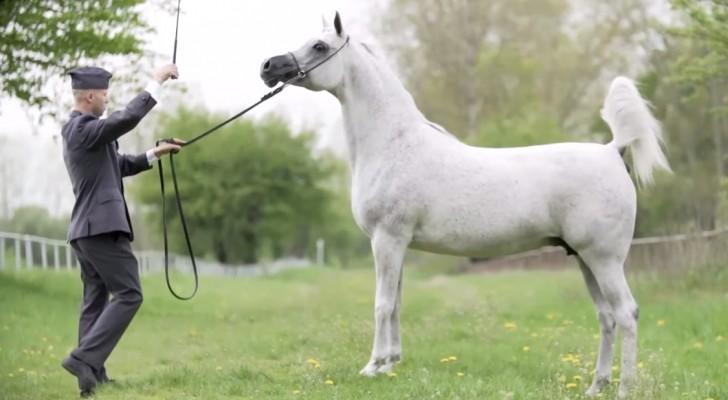 En man en een paard kijken elkaar in de ogen: de beelden die daarop volgen zijn een genot om naar te kijken