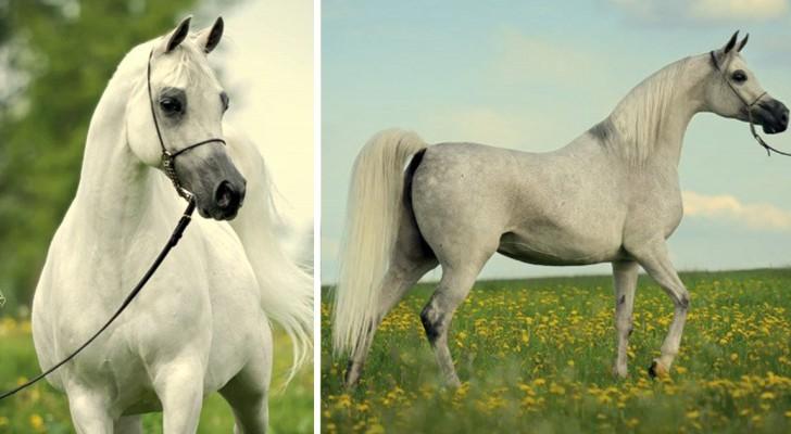 Questo cavallo ha vinto uno dei premi più prestigiosi al mondo: basta osservarlo per capire il perché