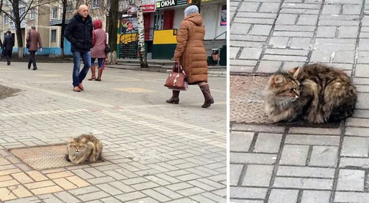 Deze kat wachtte een jaar lang op dezelfde plek op zijn baasjes die hem daar achterlieten