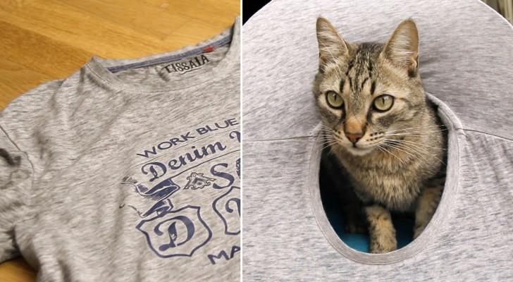 Como construir uma caminha para gatos usando uma camiseta velha