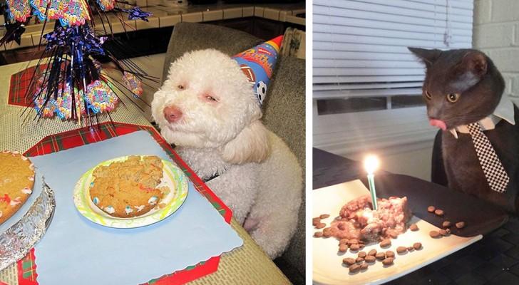 20 dieren die een mooier verjaardagsfeest dan jijzelf hebben meegemaakt!