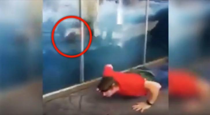 Een man begint push-ups te toen in een dierentuin. De reactie van de ijsbeer is onbetaalbaar!