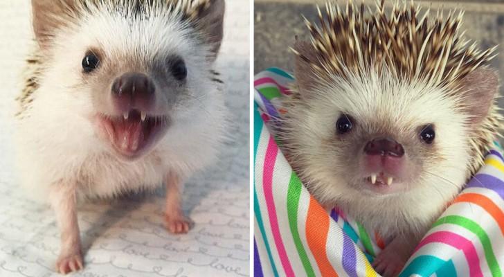 Mette su internet le foto del suo riccio vampiro, e lui... diventa una star!