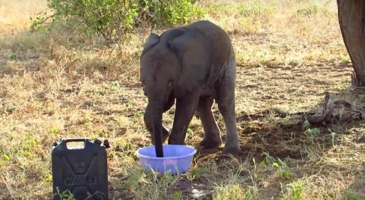 Hij bindt een olifant aan een boom. Dierenmishandeling? Integendeel! Kijk wat er kort daarna gebeurt...