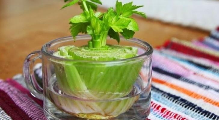 Voici 8 légumes que vous pouvez acheter une fois et cultiver pour toujours