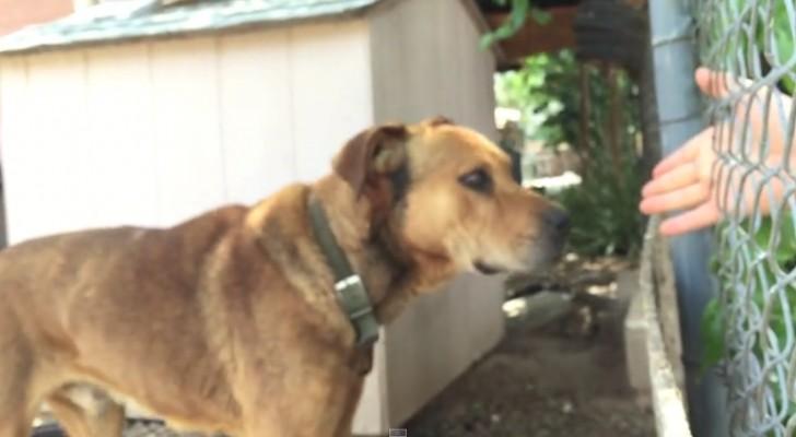 Den här hunden har tillbringat 10 år fastkedjad: så här lyckas den här mannen rädda honom