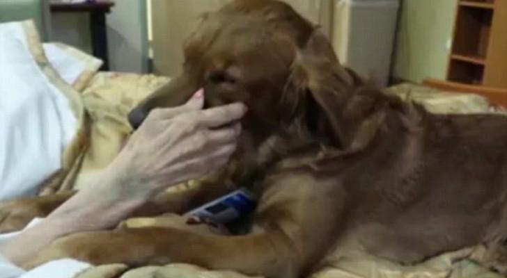 Um cachorro conforta a sua dona nas suas últimas horas... O que ele faz é tocante...