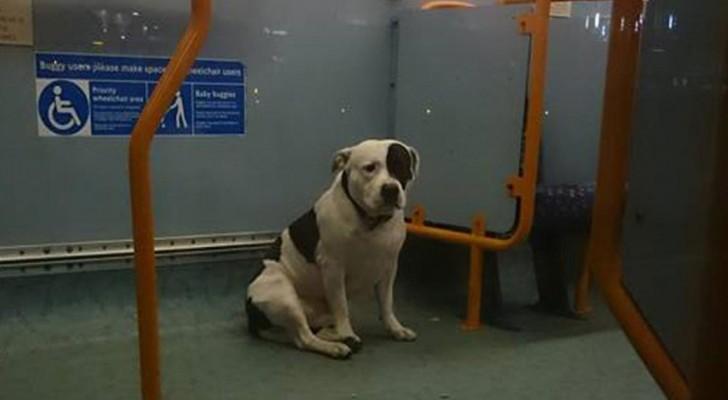 Un cane passa una notte intera su un autobus aspettando il padrone che l'ha abbandonato