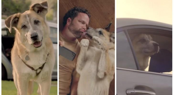 Hij stapt met zijn hond in de auto... de manier waarop hij de dag met het dier doorbrengt is emotioneel