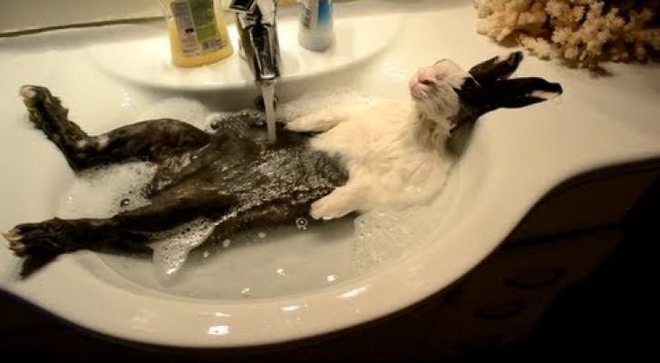 Bunny enjoying a bath !