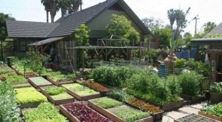 Il y a 10 ans, ils ont créé un petit jardin: aujourd'hui ils produisent 2 tonnes de nourriture avec seulement 400 mètres carrés d'espace