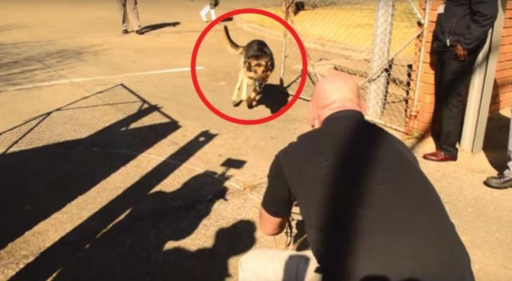 Deze militaire hond heeft deze soldaat 2 jaar lang niet gezien: kijk wat er gebeurt als ze de riem loslaten...