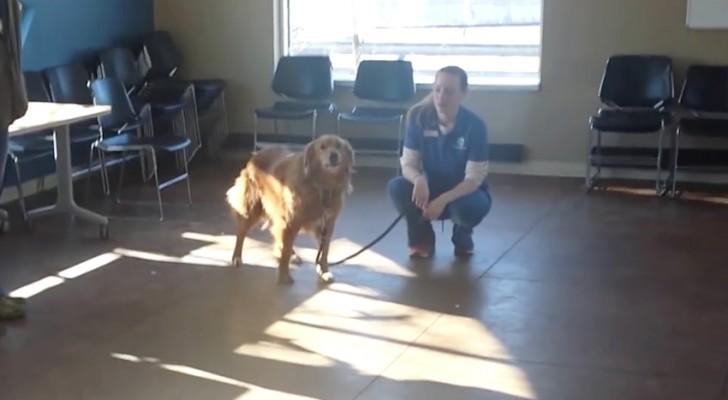 Le chien est amené dans une pièce: peu de temps après, il remarque un visage qu'il n'a pas vu depuis 20 longs mois ...