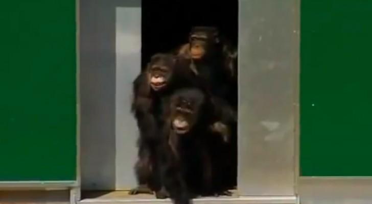 Ze brachten 30 jaar door in een kooi: dit is het moment waarop ze voor het eerst daglicht te zien krijgen