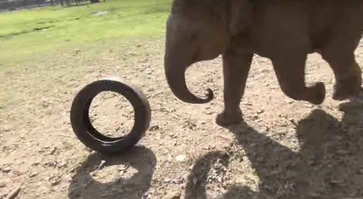 Een baby olifant vindt een autoband... de manier waarop hij deze gebruikt, is te gek!