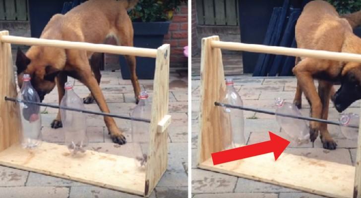 Il tuo cane sta spesso da solo? Costruisci per lui un gioco geniale riciclando bottiglie di plastica